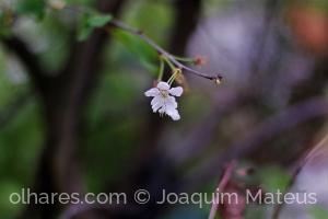 Outros/Flor...