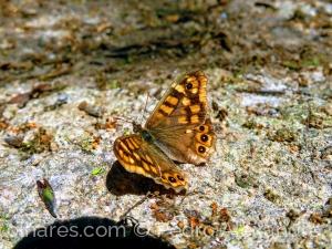 /O descanso da borboleta