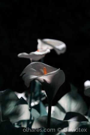 Outros/Luz do silêncio