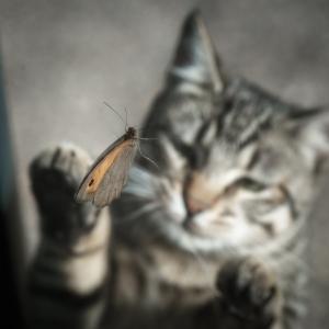 /Pipoca e a borboleta