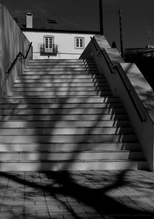 /Árvore que sobe a Escada