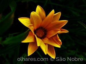 /Amarelo em Flor