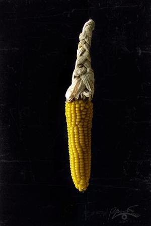 /Se uma espiga de milho for adubada