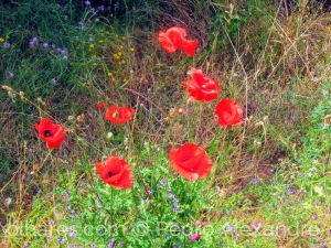 Paisagem Natural/Cores da primavera