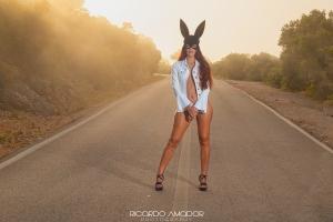 Nus/The Bunny