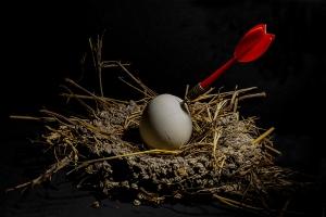 Abstrato/...a morte no ninho