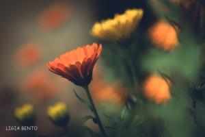 Paisagem Natural/cores primavera/verão 21