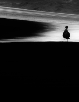 Animais/O refúgio da Gaivota amiga do Homem solitário