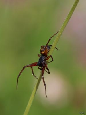 Macro/Spider...