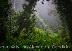 Paisagem Natural/Floresta