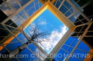 Arquitetura/Geometria Arborizada