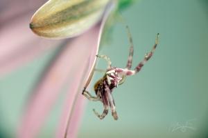Animais/aranha da minha sorte