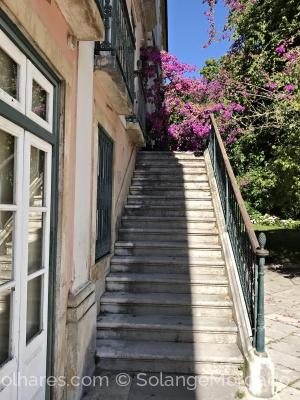 Paisagem Urbana/A escada da buganvília