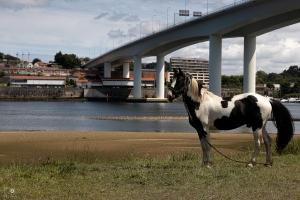 Paisagem Natural/O cavalo foi ao rio... Areinho