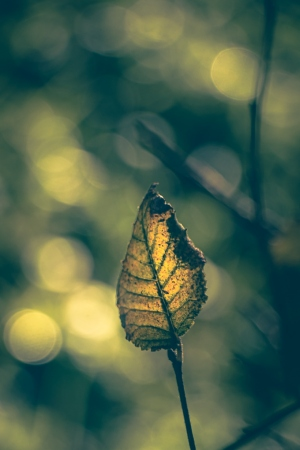 Paisagem Natural/a folha e a luz