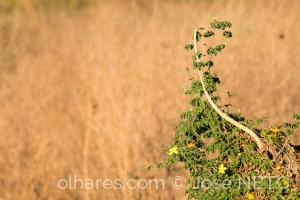 Paisagem Natural/raro verde no sertão..