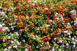 /Jardim florido