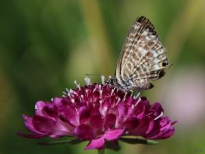 Macro/Little Butterfly...