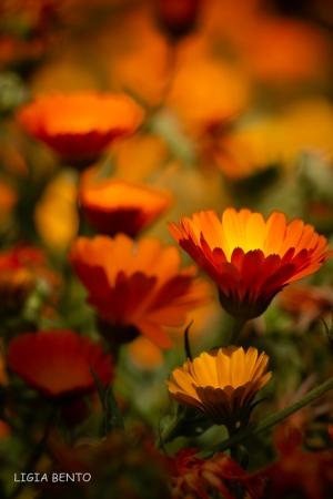 Paisagem Natural/cores de verão