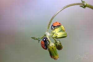 Animais/Prezo insetos mais que aviões