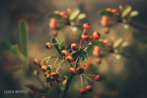 Paisagem Natural/green & red