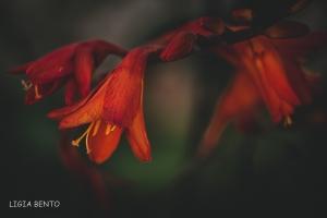 Paisagem Natural/da cor do fogo