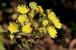 Paisagem Natural/Amarelas como o Sol