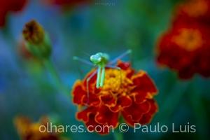 Macro/Em defesa das flores