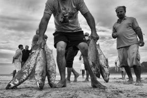Fotojornalismo/A Pesca