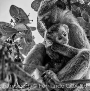 Animais/Mãe e filho