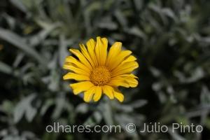 Macro/ Sunshine