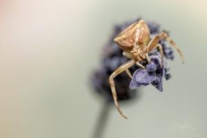 Animais/aranha do meu destino