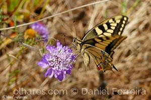 /Sugando o néctar