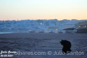 Animais/Gato no Por do Sol @Albufeira