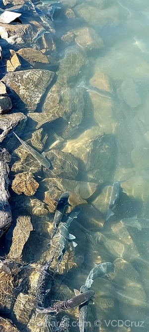 /Peixes