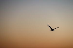 Animais/Uma gaivota e o céu