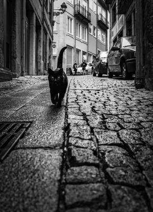 Fotografia de Rua/Pelas ruas do Porto..