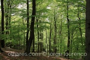 Paisagem Natural/A Floresta