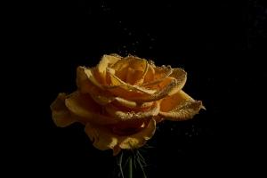 Outros/Já é uma rosa...