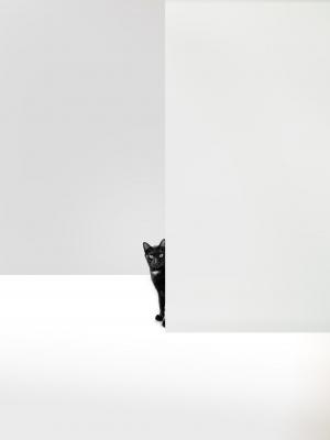 /Mulheres e gatos agem como bem entendem. Homens e