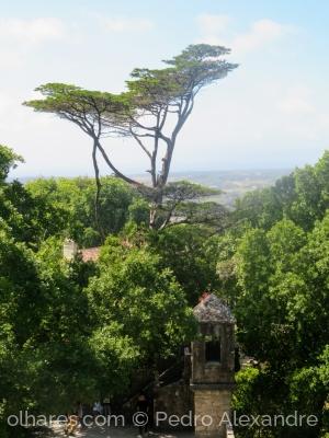 Paisagem Natural/Árvore maior