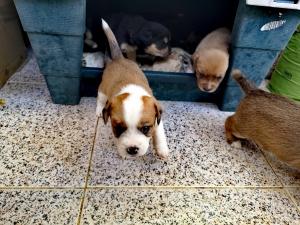 Animais/Cãezinhos