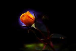 Macro/Simplesmente Rosa \_( ` ;` )_/