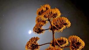 Paisagem Natural/Lua de verão