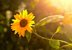 Macro/Luz etérea de um fim de tarde de Verão