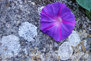 Macro/sobre a pedra