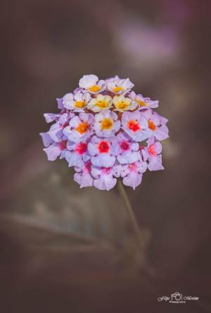 Macro/summer color