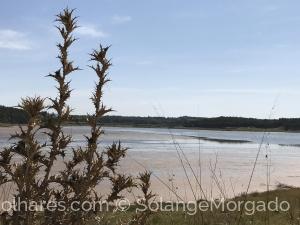Paisagem Natural/Olhando a Lagoa de Óbidos