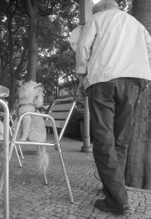 Fotografia de Rua/Uma troca de olhares