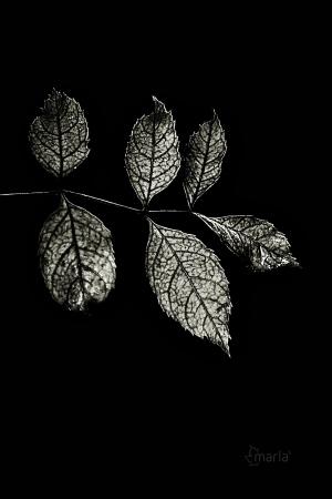 Macro/crepúsculo